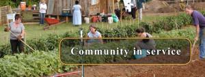 Cover photo for Internship Opportunity Non-Profit Asheville Organic Garden