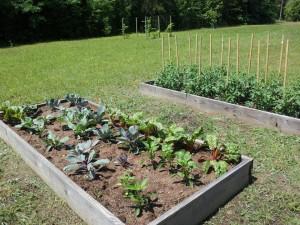 Cover photo for Mount Vernon Community Garden