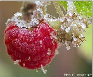Cover photo for First and Last Frost Dates - Interactive Map & Chart